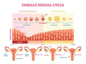 ciclul menstrual erna stoian